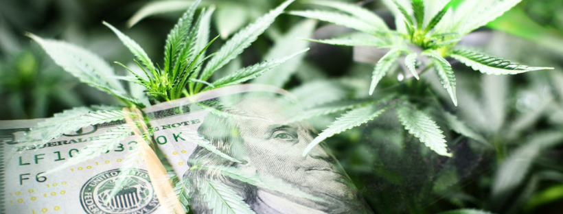 Why Should You Create a Cannabis Business?
