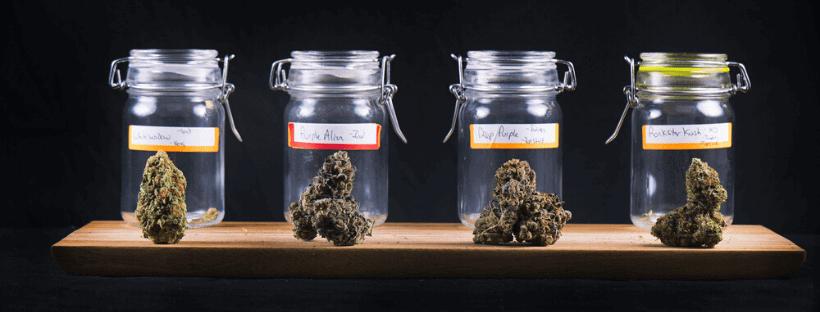 Short-Term Cannabis Storage