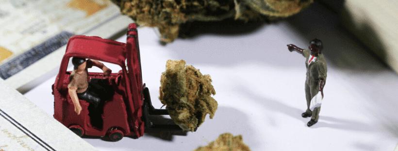 Should You Start An Ancillary Cannabis Business